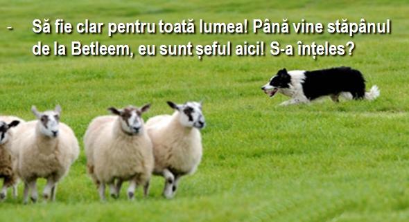 Cainele si oile