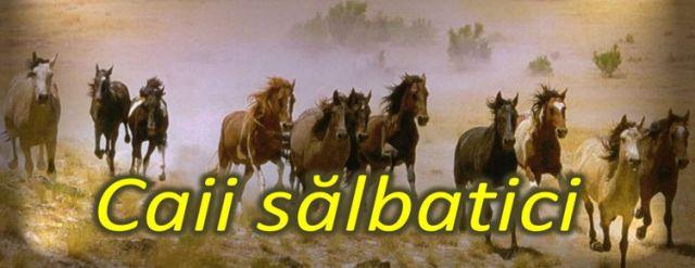 caii salbatici