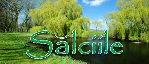 Salciile