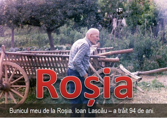 Rosia 6